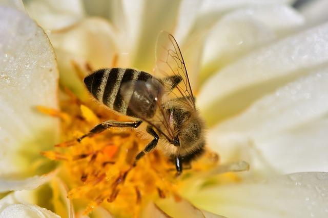 Costruire un alveare per api